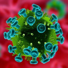 The HIV retrovirus.